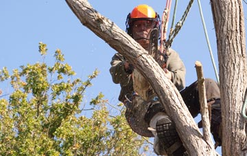 finding qualified Belfast tree surgeons