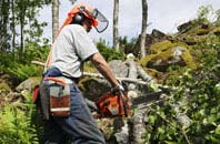 Belfast tree removal services
